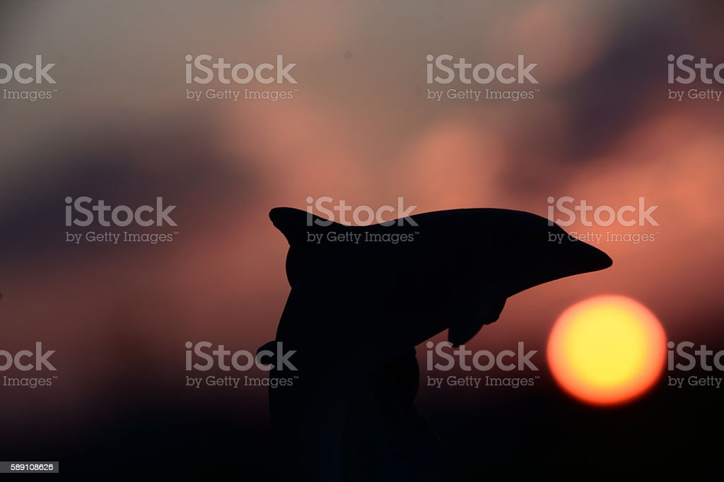 Dolphin Silhouette stock photo