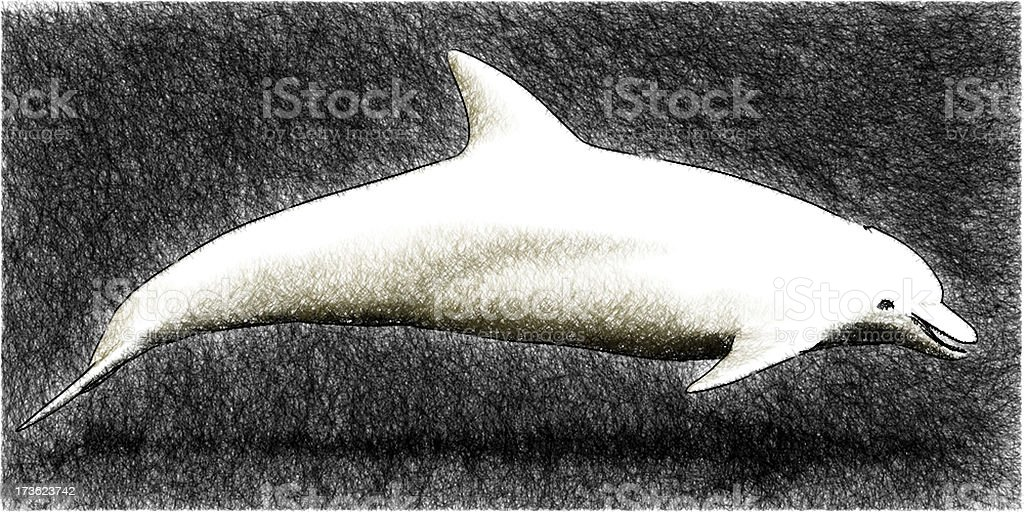 Dolphin - sketch royalty-free stock photo