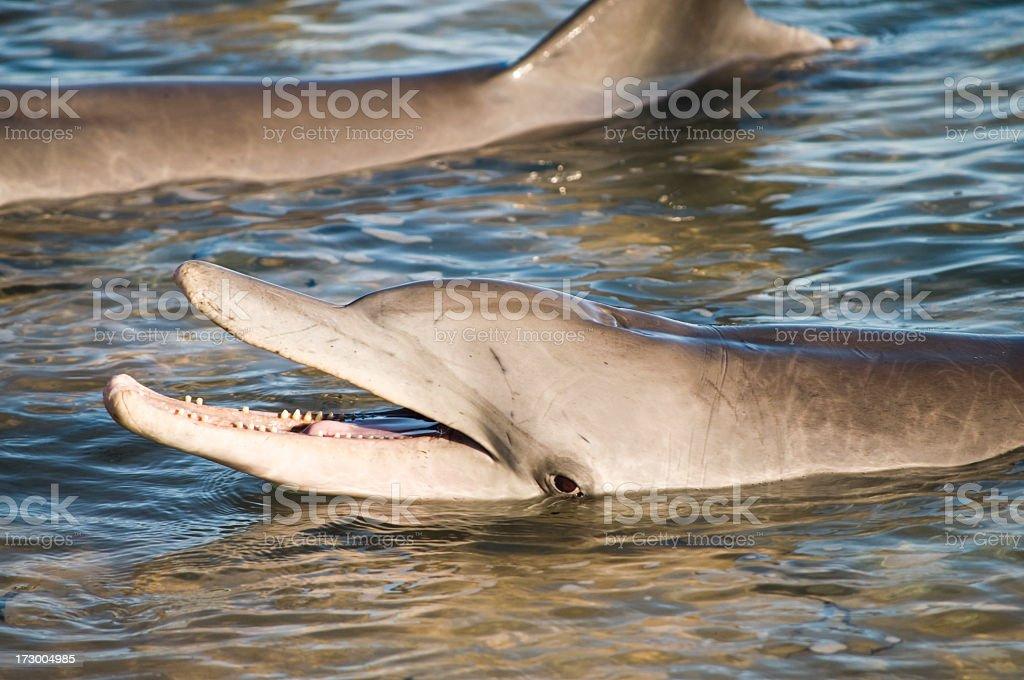 Dolphin Smile stock photo