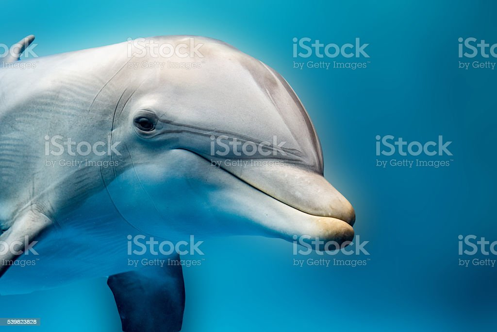 dolphin smiling eye close up portrait detail stock photo