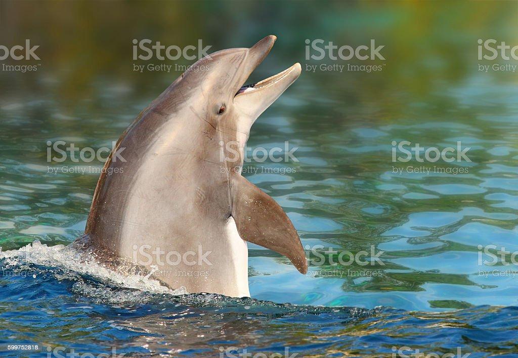 Dolphin smiling. stock photo