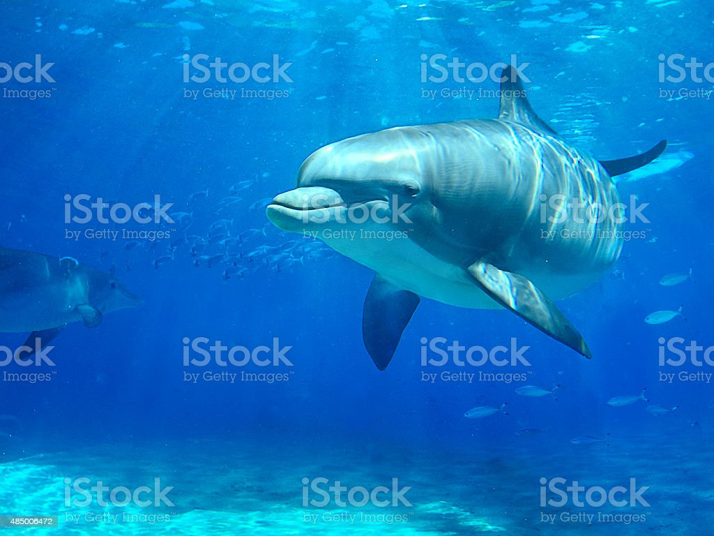 Dolphin swimming in water stock photo