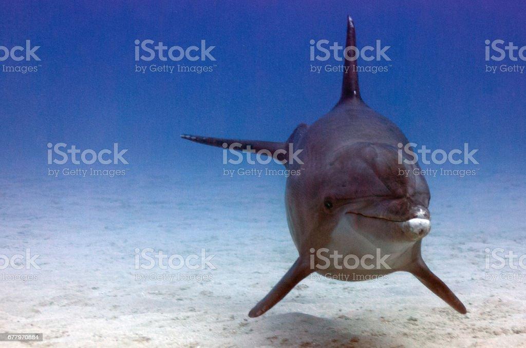 Dolphin swimming stock photo