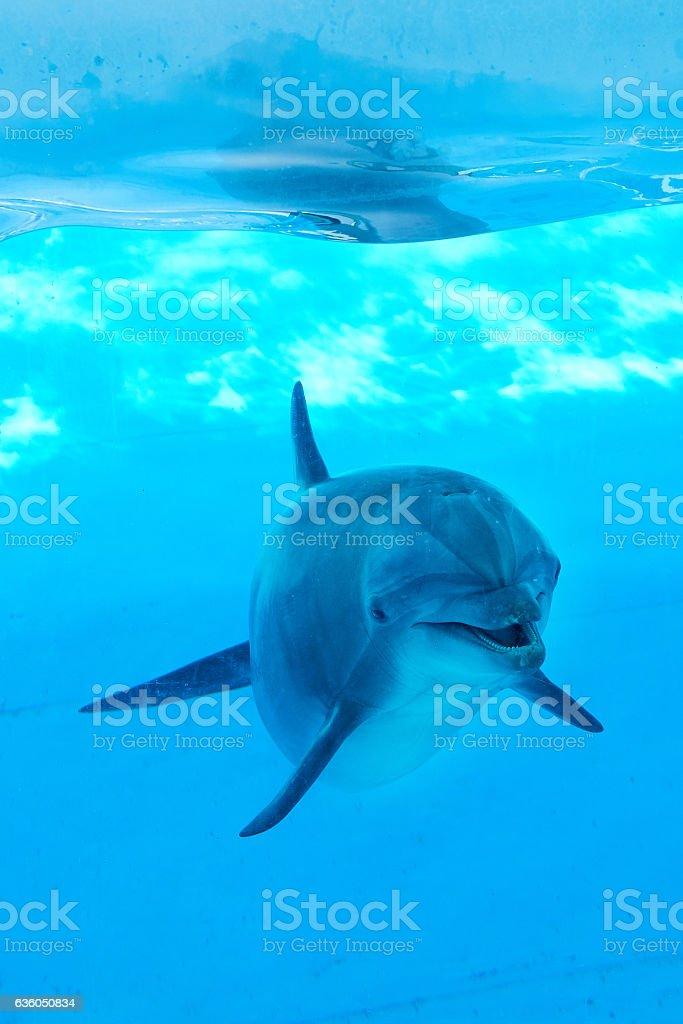 Dolphin underwater looking posing stock photo