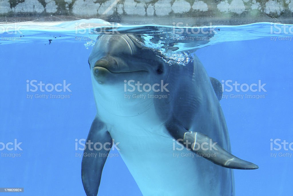 Dolphin Watching The Camera stock photo