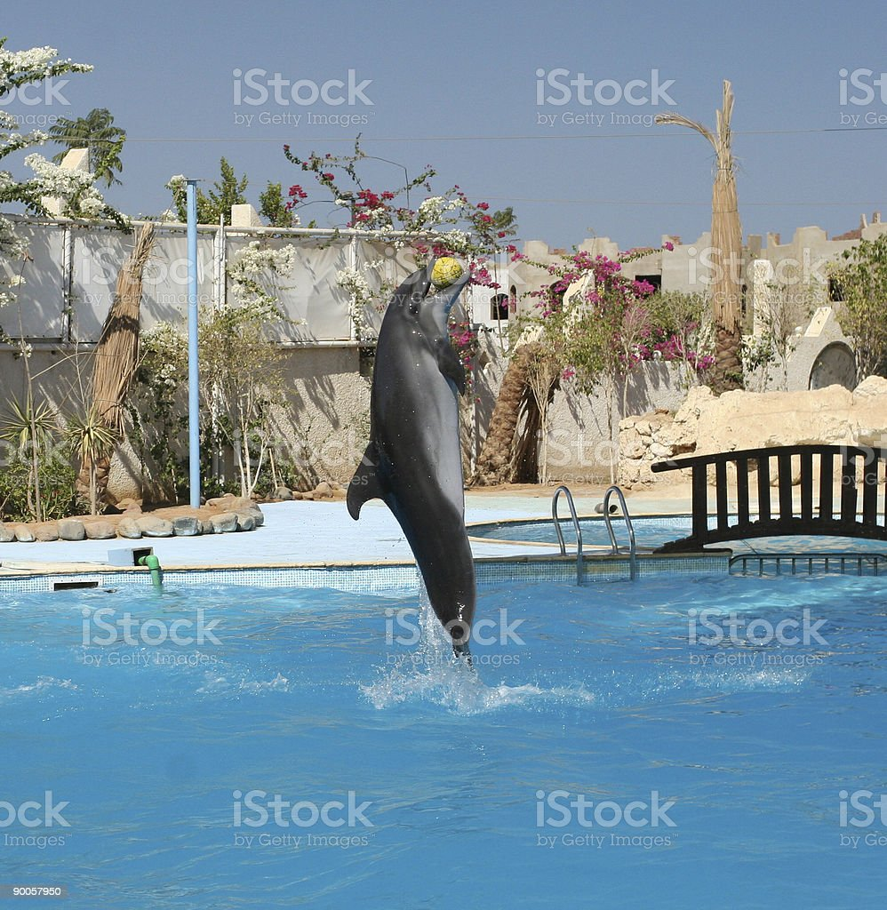 Dolphin With Ball royalty-free stock photo
