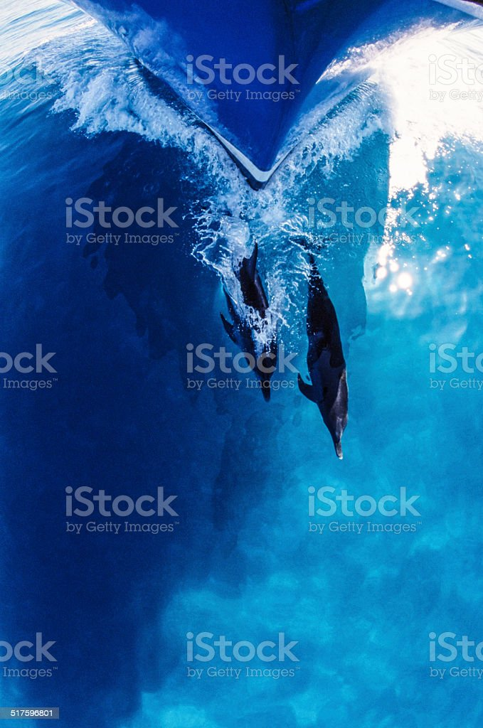 Dolphins and Bow stock photo