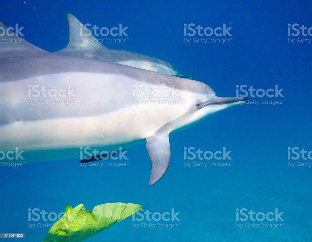 Dolphins: Animals, Wildlife stock photo