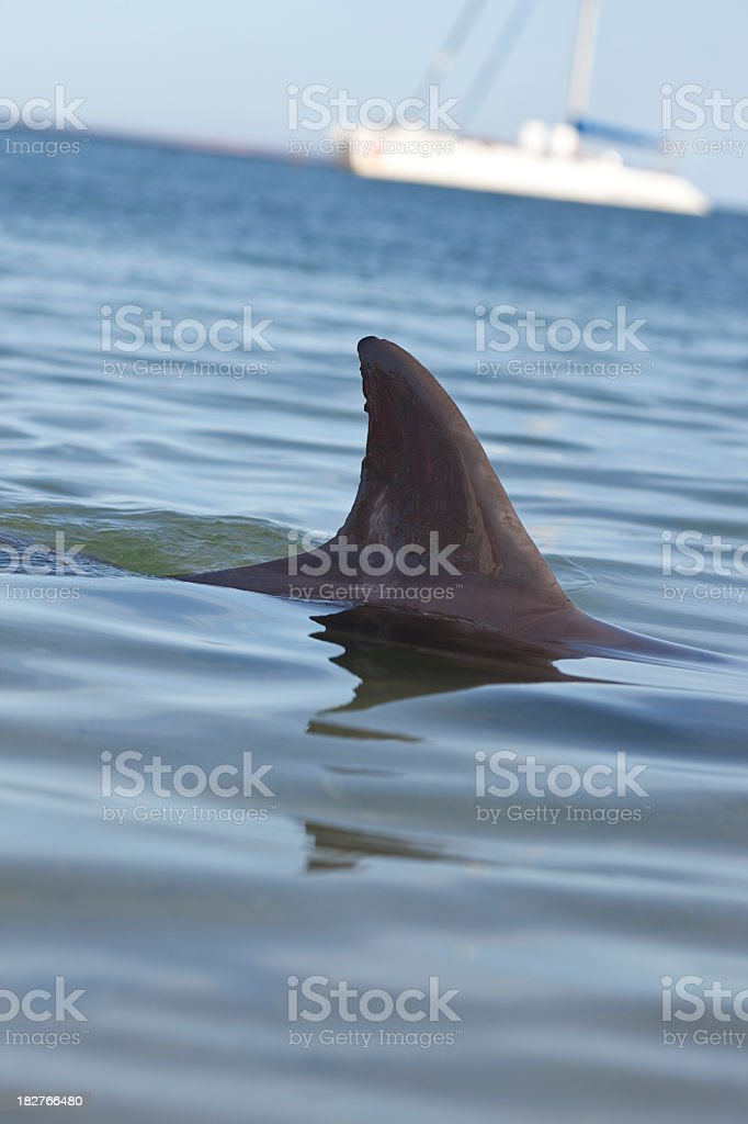 Dolphin's fin. royalty-free stock photo