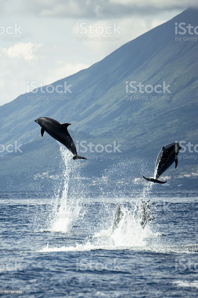 Dolphins jumping in the Wilderness stock photo