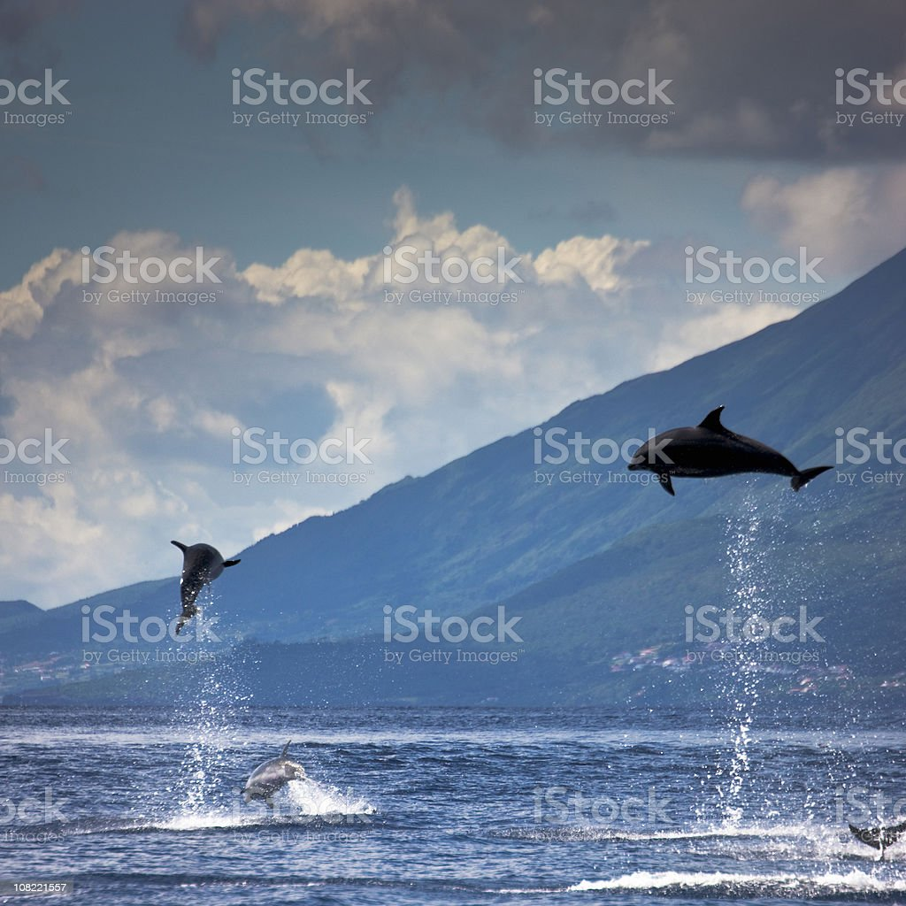 Dolphins Jumping into the Air stock photo