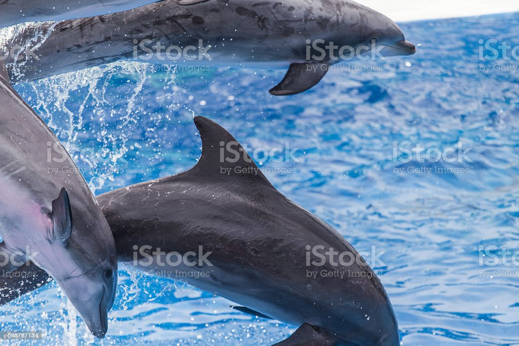 Dolphins jumping on water stock photo