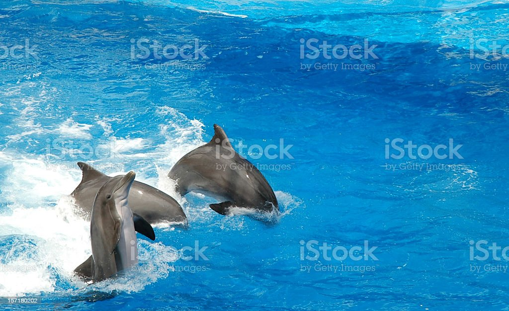 dolphins show off stock photo