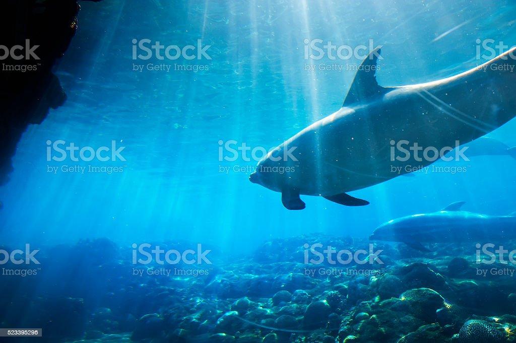 Dolphins underwater stock photo
