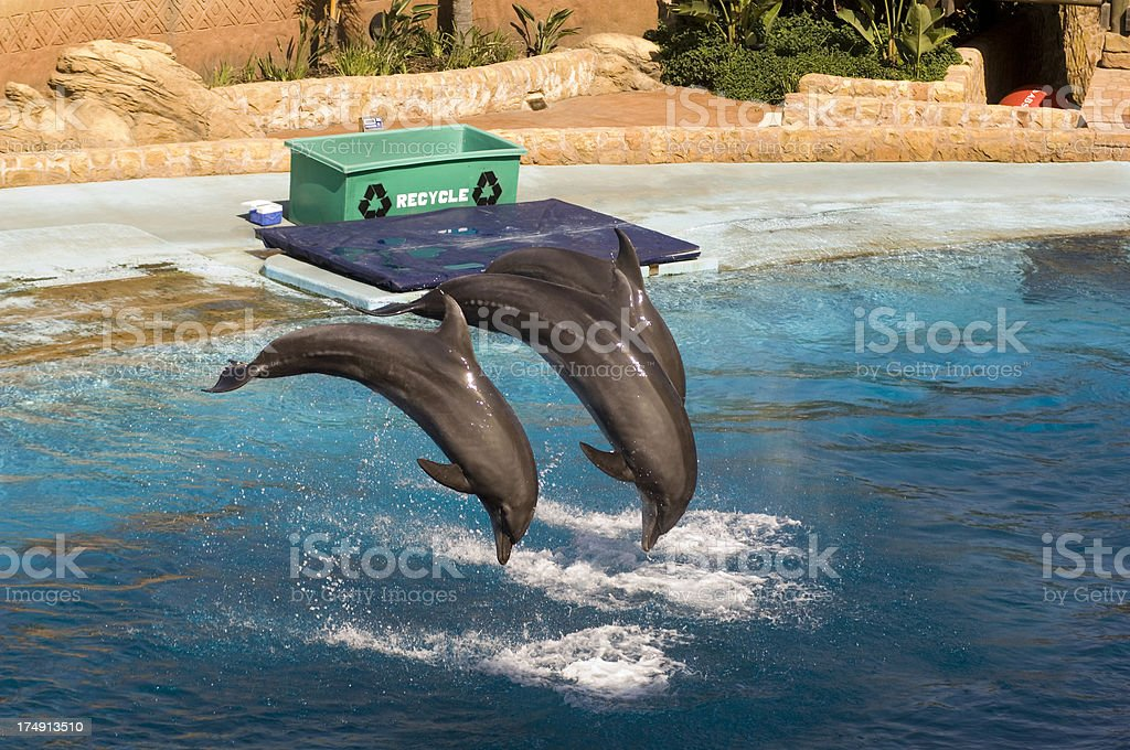 Dolpins jumping stock photo