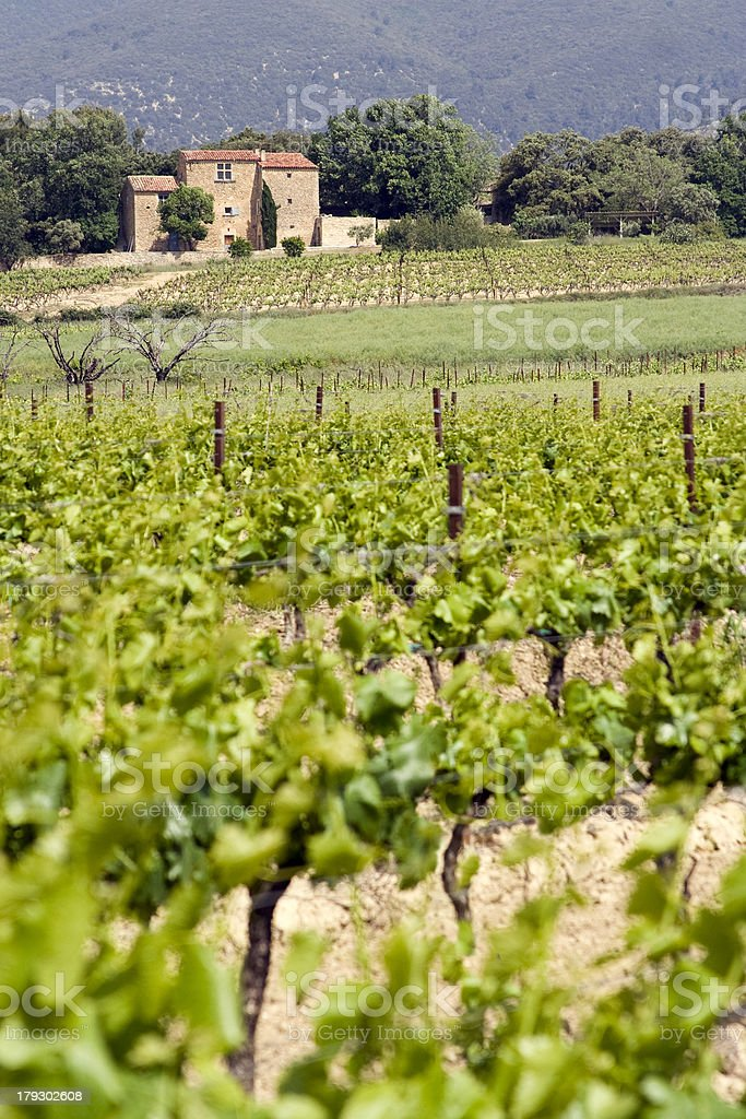 Domaine viticole en Provence royalty-free stock photo