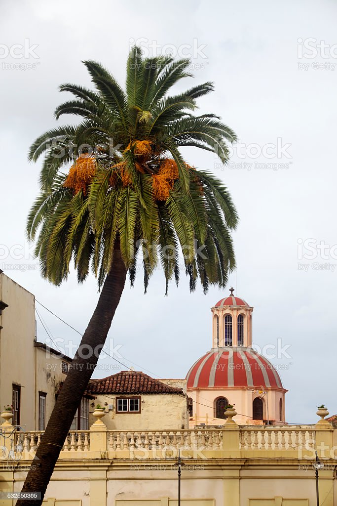 Dome and palm tree in La Orotava, Tenerife. stock photo