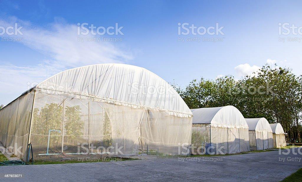dome of hydro-culture plant stock photo