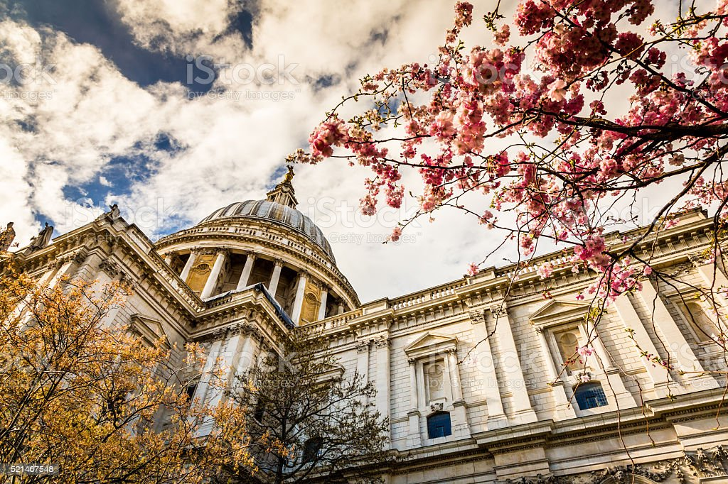 Dome of St Paul's Cathedral with Cherry Blossom, London, UK stock photo