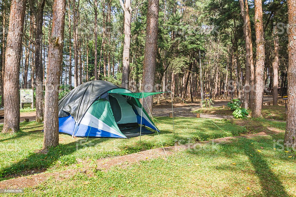 Dome tent camping in forest stock photo