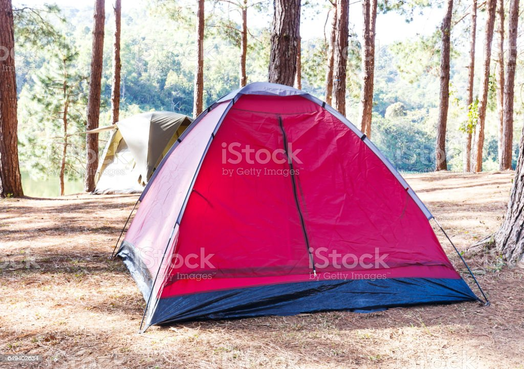 Dome tent in camping site with pine trees and lake stock photo