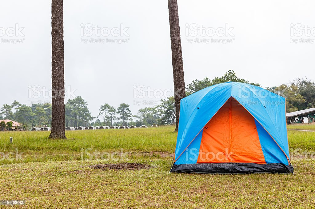 Dome tents camping near pine tree on high mountain stock photo