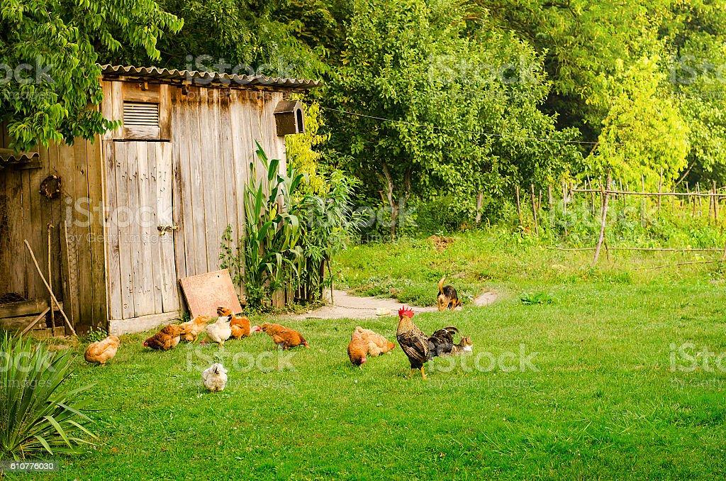 Domestic animals in farmyard stock photo