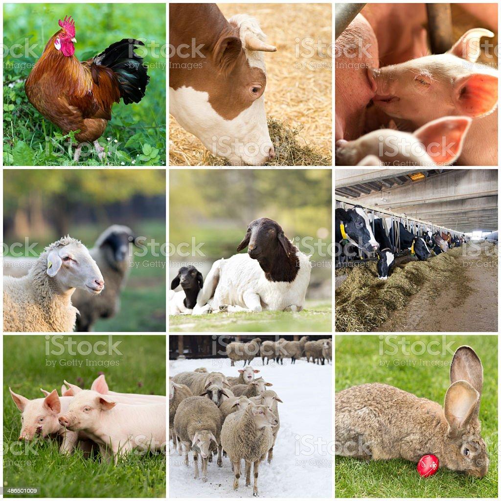 Domestic animals stock photo