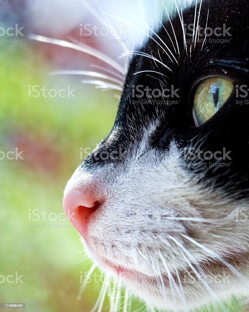 domestic cat face side view royalty-free stock photo