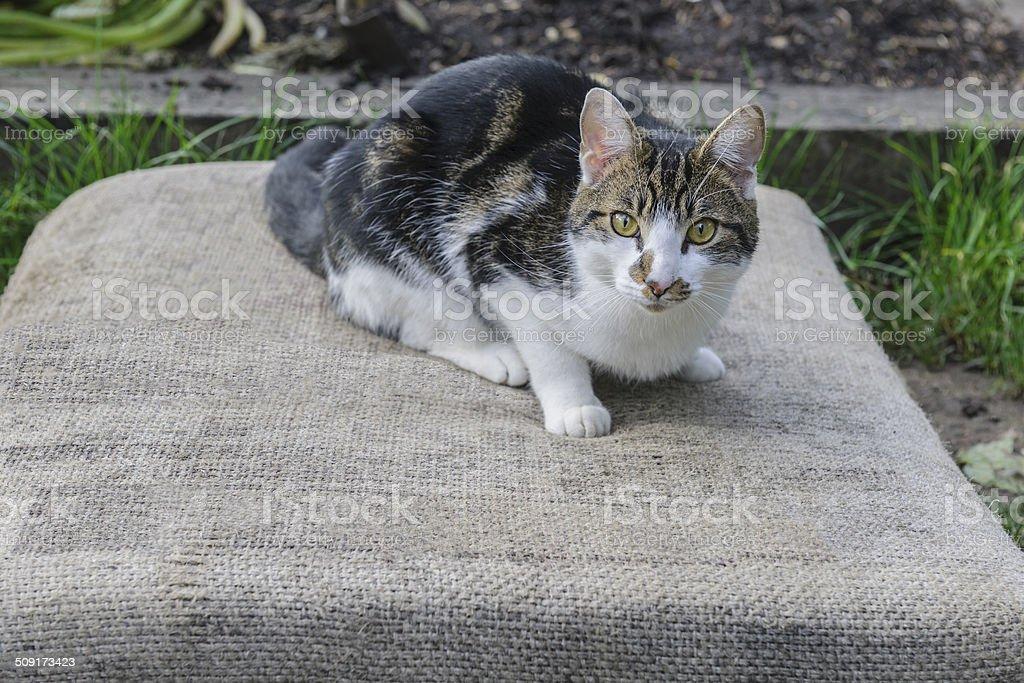 Domestic Cat in City Garden, London royalty-free stock photo