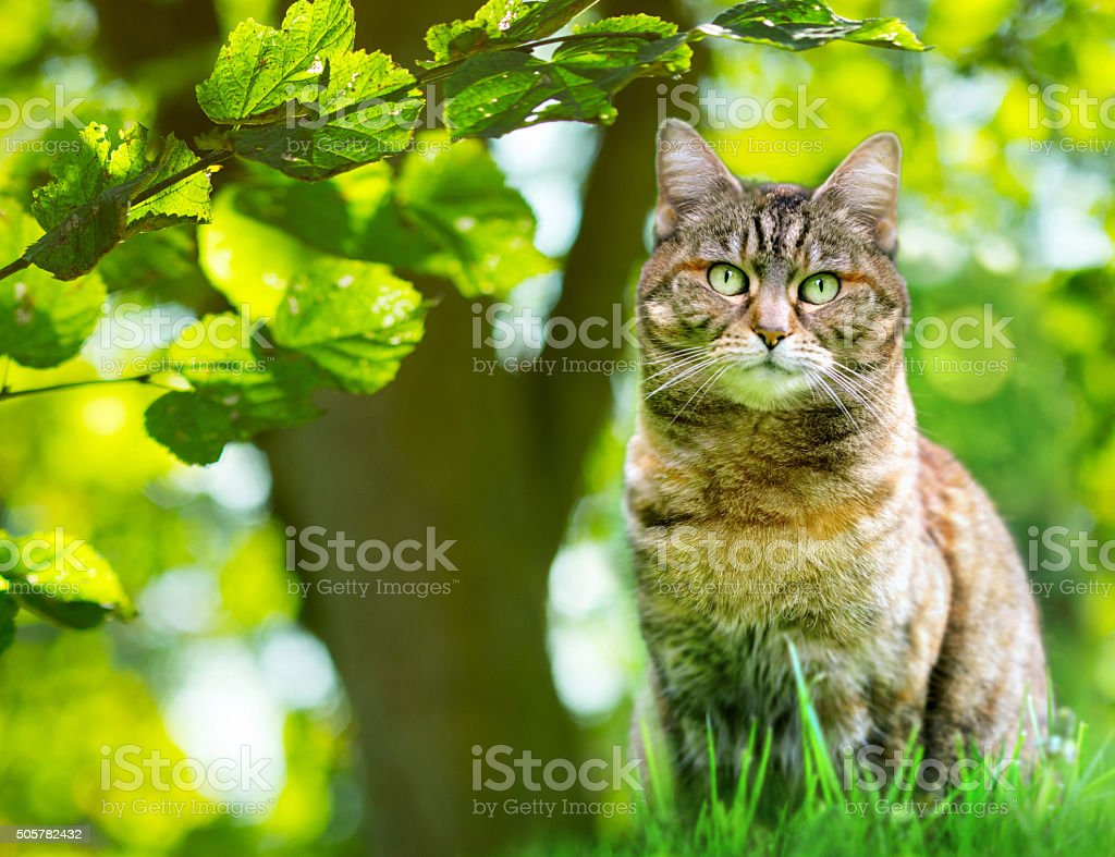 Domestic cat in garden stock photo