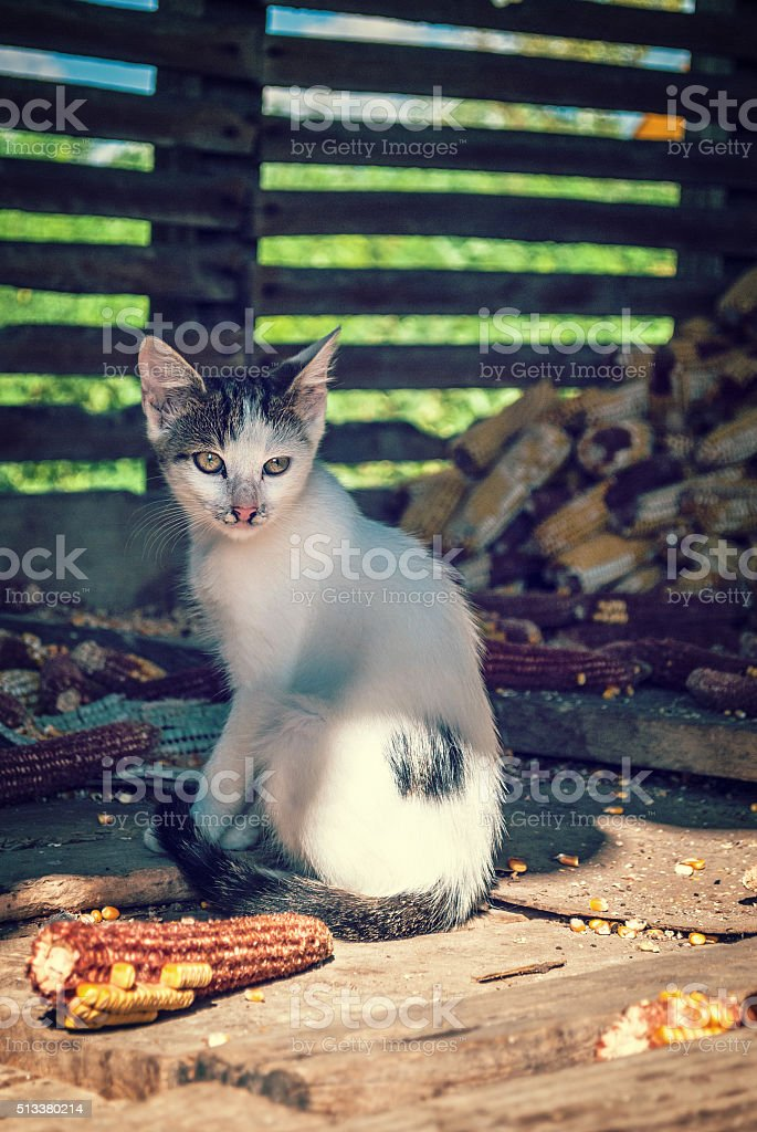 Domestic cat in the countryside stock photo