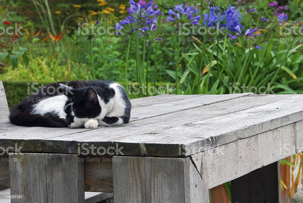 Domestic cat laying on a picnic table stock photo