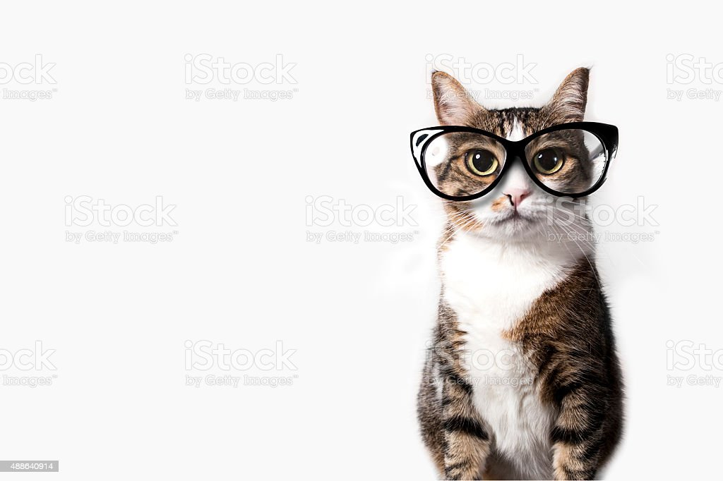 Domestic cat with eyeglasses. stock photo
