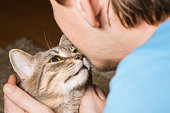 domestic tabby cat and man
