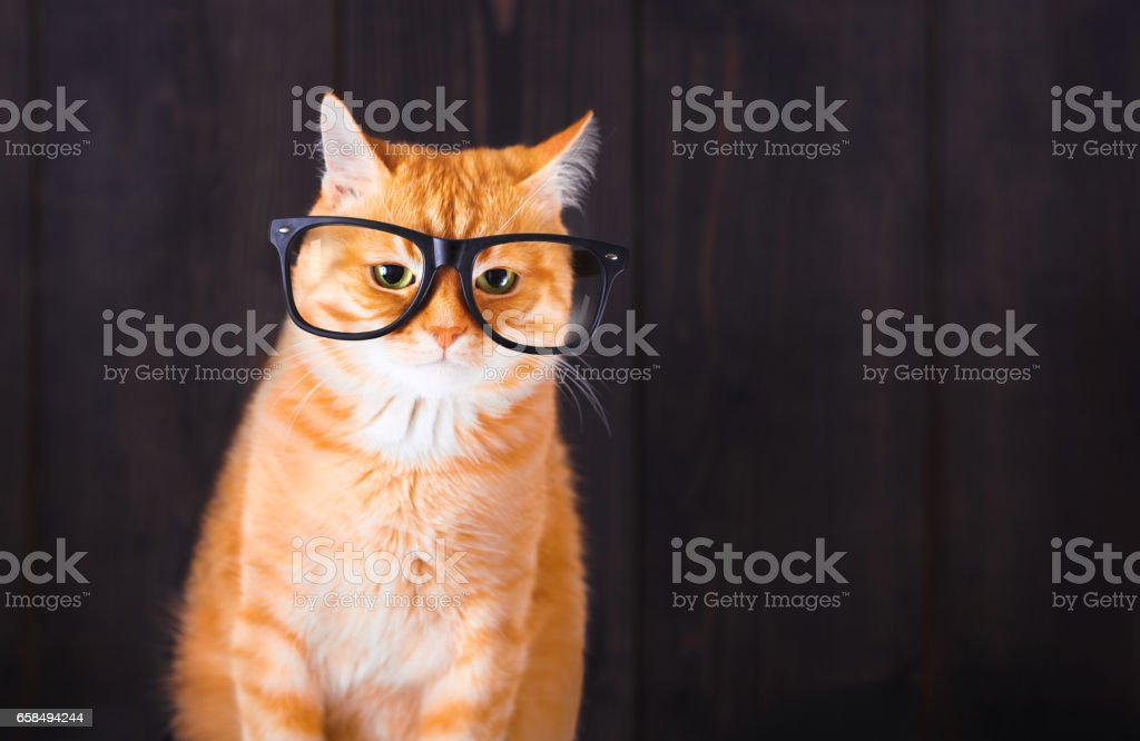 Domestic tabby cat with eyeglasses. stock photo