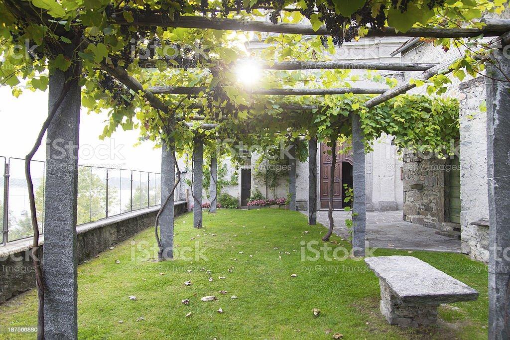 Domestic vineyard royalty-free stock photo