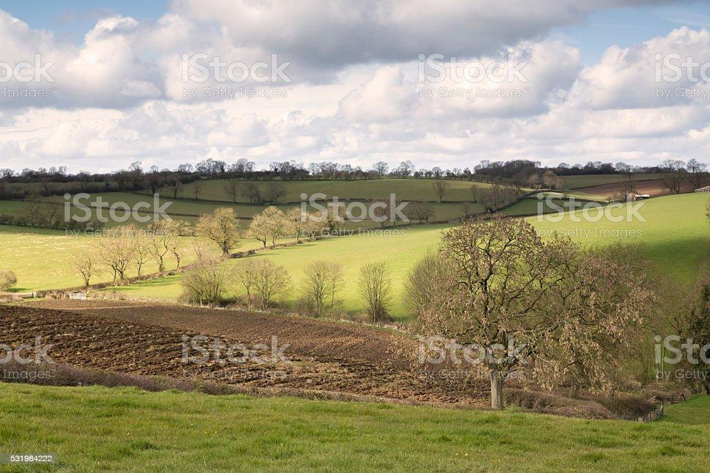 Dominant Ash Tree stock photo