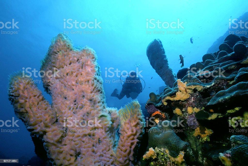 Dominique Reef photo libre de droits