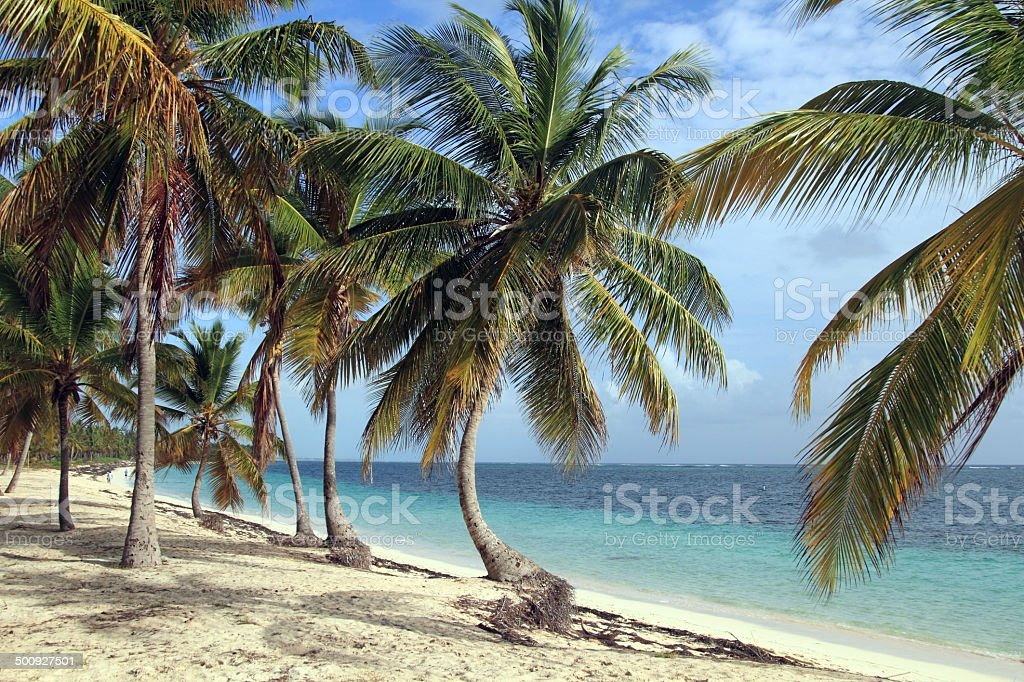 Dominican beach royalty-free stock photo