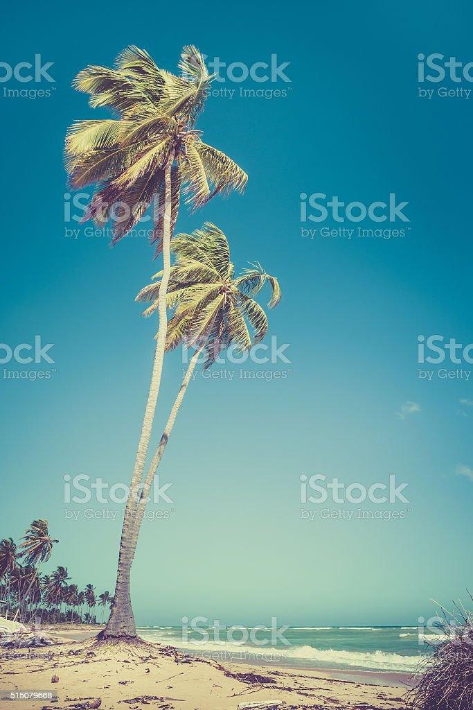 Dominican Republic beach stock photo