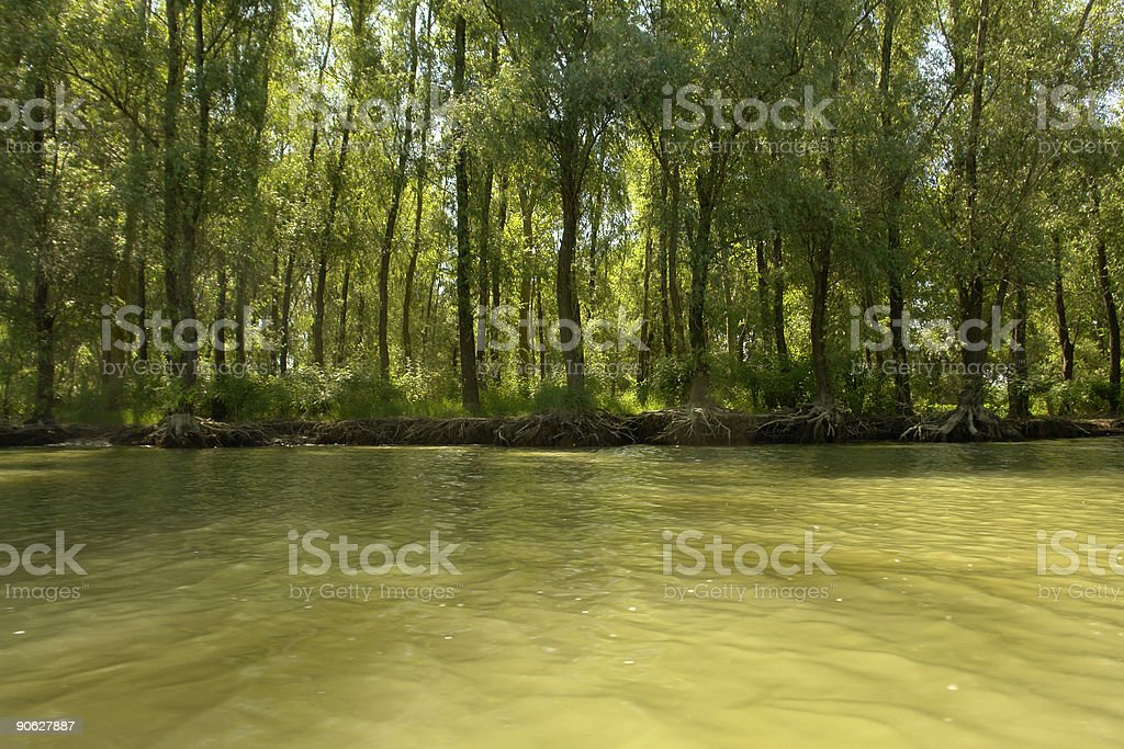 donaudelta green forest stock photo
