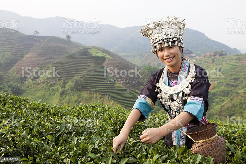 Dong Tribe Tea Picker royalty-free stock photo