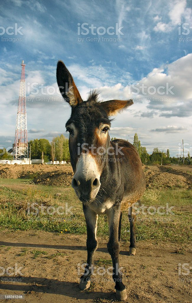 Donkey and blue sky with clouds royalty-free stock photo