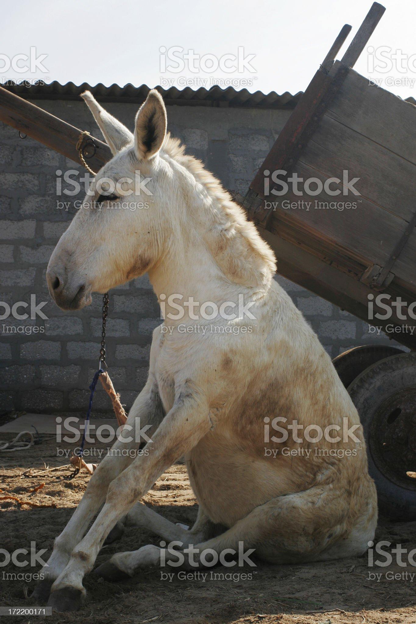 Donkey and Cart royalty-free stock photo