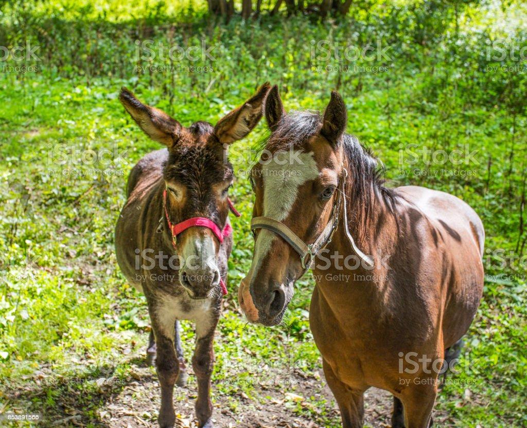 Donkey and horse close-up stock photo