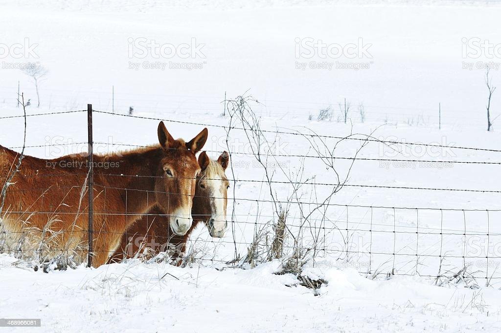 Donkey and Horse royalty-free stock photo