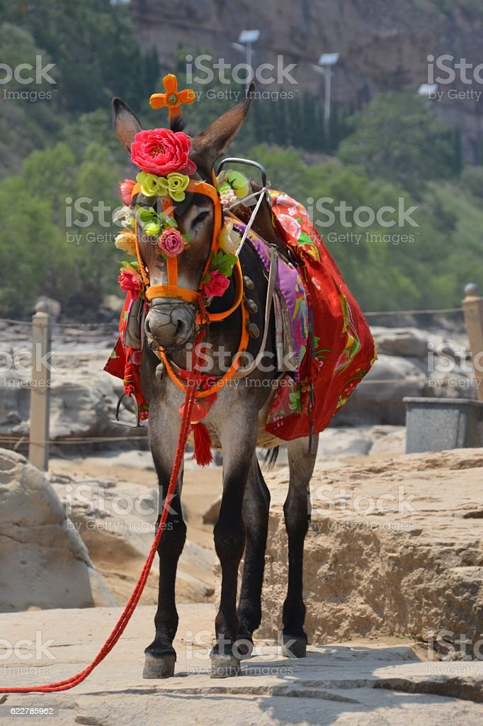 Donkey at Hukou waterfall, Shaanxi, China stock photo