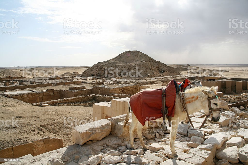 Donkey at the archeological site, Giza, Egypt stock photo