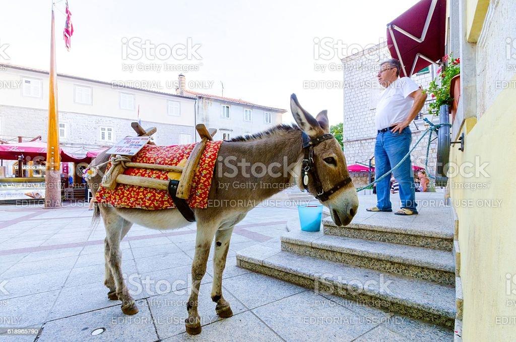 Donkey at Vale market place, Krk town, Croatia stock photo